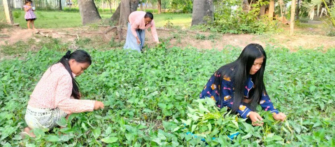 Pflanzen und Ernten im Kinderdorf
